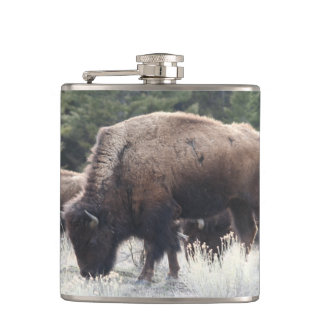 A Herd of Brown Bison Graze in a grassy Meadow Flask