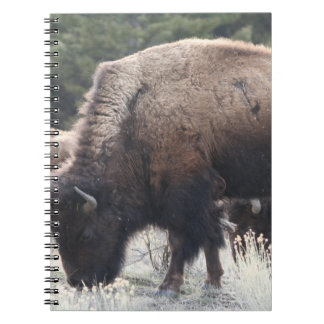 A Herd of Brown Bison Graze in a grassy Meadow Spiral Notebooks