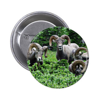A Herd of Rams 2 Inch Round Button
