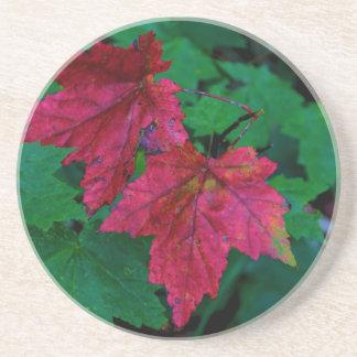 A Hint of Autumn Coaster