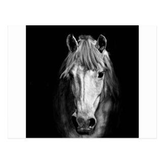 A Horse Called Elvis Postcard