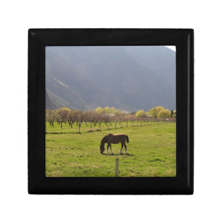 A horse in a valley pasture gift boxes