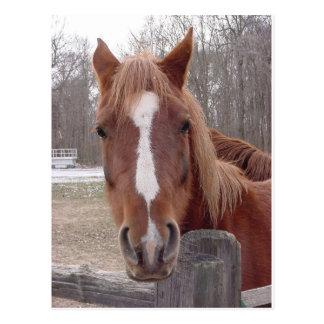 A Horse Of Course Postcard