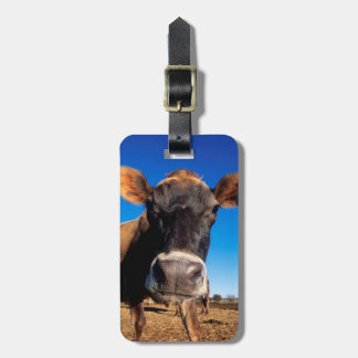 A Jersey cow being inquisitive Bag Tags