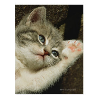 A kitten, with large blue eyes, lays on it's postcard