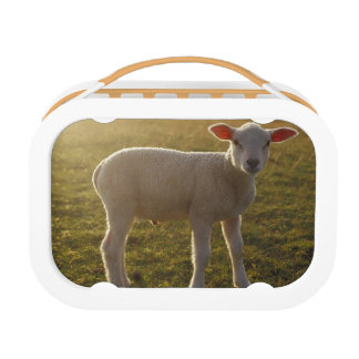 A Lamb at the Setting of the Sun Sweden Lunch Boxes