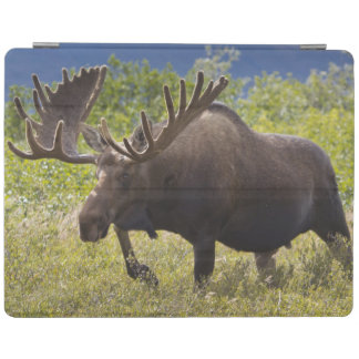 A large bull moose stands among willows iPad cover