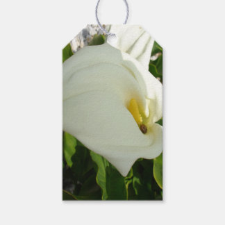 A Large Single White Calla Lily Flower Pack Of Gift Tags