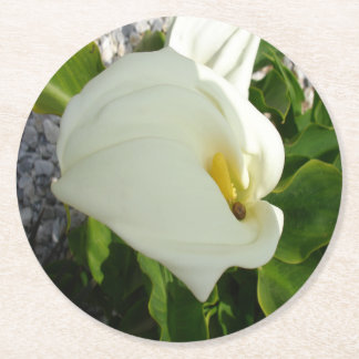 A Large Single White Calla Lily Flower Round Paper Coaster