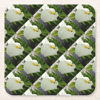 A Large Single White Calla Lily Flower Square Paper Coaster