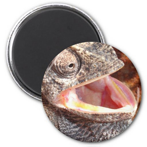A Laughing Chameleon Refrigerator Magnets