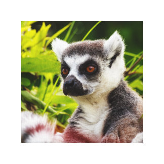 a lemur of madagascar on wrapped  canvas