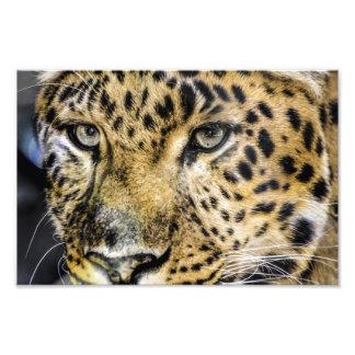 A Leopard's Eyes Photo Print