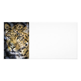 A Leopard's Eyes Photo Card