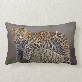 A Leopards Tail Pillow