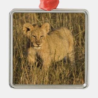 A lion cub laying in the bush in the Maasai Mara Silver-Colored Square Ornament