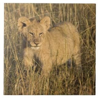 A lion cub laying in the bush in the Maasai Mara Tiles