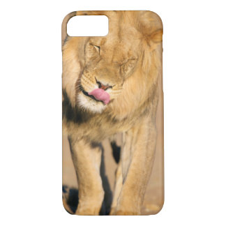 A Lion shaking its head and licking its mouth iPhone 7 Case