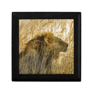 A Lion Waits, Zimbabwe Africa Gift Box