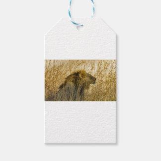 A Lion Waits, Zimbabwe Africa Gift Tags