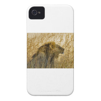 A Lion Waits, Zimbabwe Africa iPhone 4 Case-Mate Cases