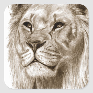 A Lion - Without Pride Drawing Sketch Art Square Sticker