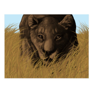 A Lioness Hunting in Tall Grass Postcard