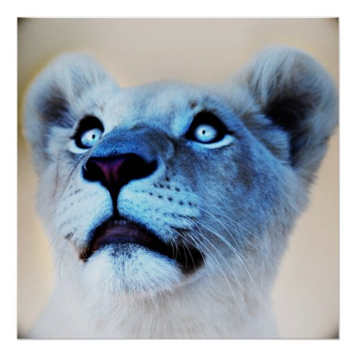 A lions surprise posters