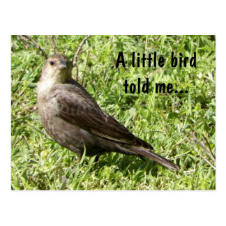 A Little Bird Told Me - Postcard