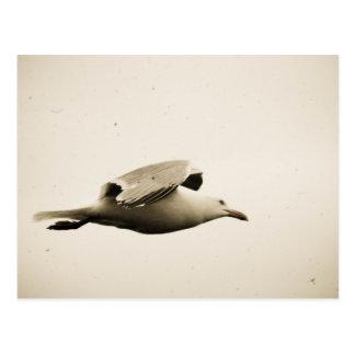 A Little Birdie- Flight of the Seagull Postcard