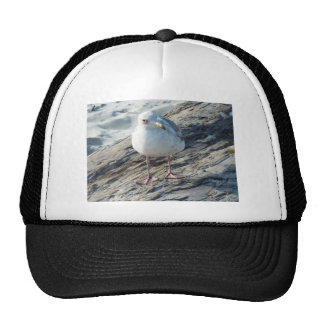 """""""A Little Birdie Told Me That...."""" Template Mesh Hat"""