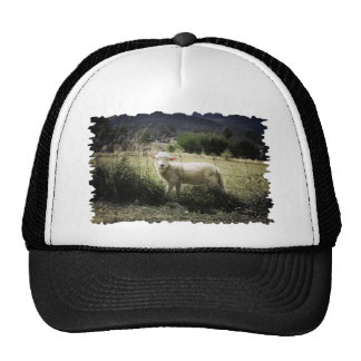 a little white lamb behind a fence in a field trucker hat