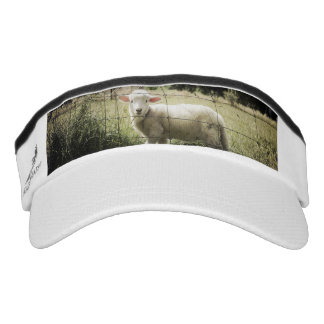 a little white lamb behind a fence in a field visor