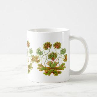 A Liverwort Coffee Mug