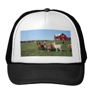 A Llama adventure in the country Trucker Hat