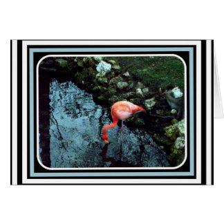 A Lone Flamingo Card