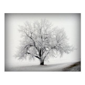 A lone Frostry Tree in the North Dakota Prairie Postcard
