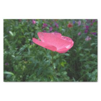A Lone Poppy Tissue Paper