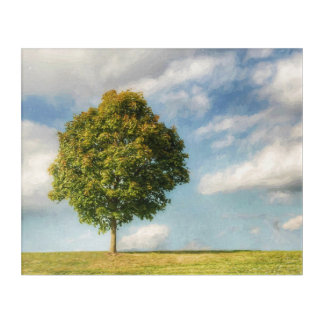 A Lone Tree Full of Life with a Blue Sky & Clouds Acrylic Print