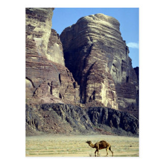 A lonely camel, Wadi Rum Desert, Jordan Desert Postcard