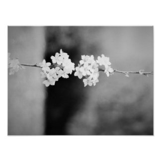 A Lonely White Flower Poster