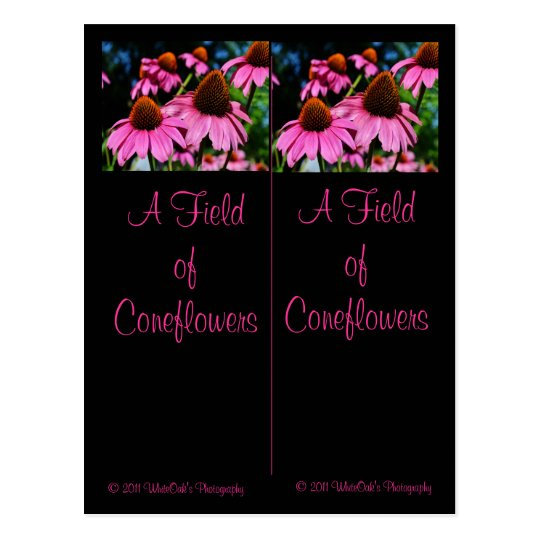 A lot of Coneflowers Bookmark Postcard