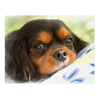 A Love Like No Other Cavalier King Charles Spaniel Postcard
