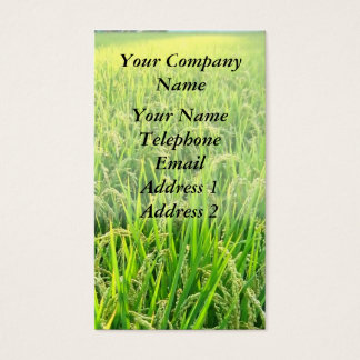 A Lush Green Rice Field with Ripe Ears of Rice Business Card