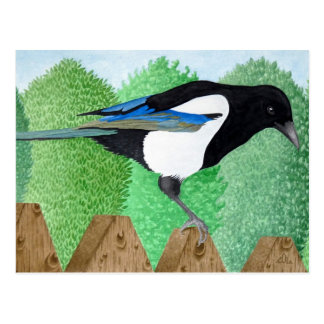A Magpie perched on a fence Postcard
