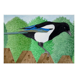 A Magpie perched on a fence Poster