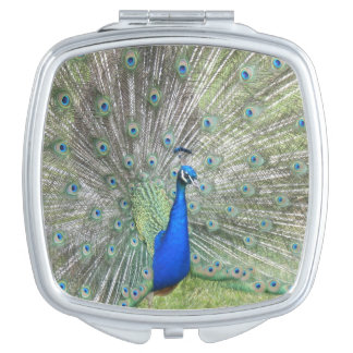A Male Indian Peacock Fans it's tail Feathers Travel Mirrors