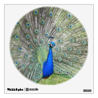 A Male Indian Peacock Fans it's tail Feathers Wall Sticker