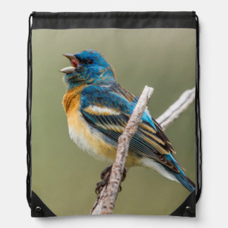 A Male Lazuli Bunting Songbird Singing Drawstring Backpacks