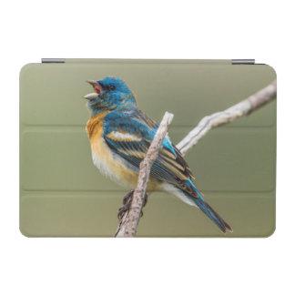 A Male Lazuli Bunting Songbird Singing iPad Mini Cover